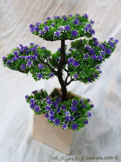 گل آپارتمانی, درختچه بنسای