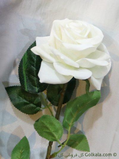 رز جیر, رز سفید, عکس گل رز سفید