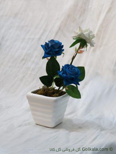 گل رز فرانسوی , عکس گل رز