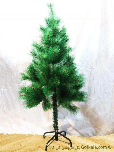 درختچه کاج بزرگ