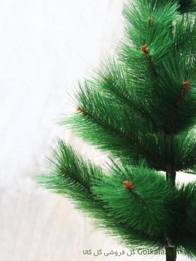 درختچه کاج کوچک