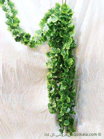 ریسه برگ سبز پیچک, پیچک مصنوعی, گیاهان آپارتمانی