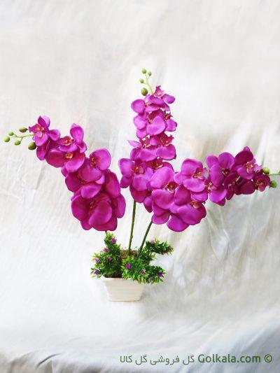گل ارکیده زیبا, گلدان گل ارکیده ارغوانی