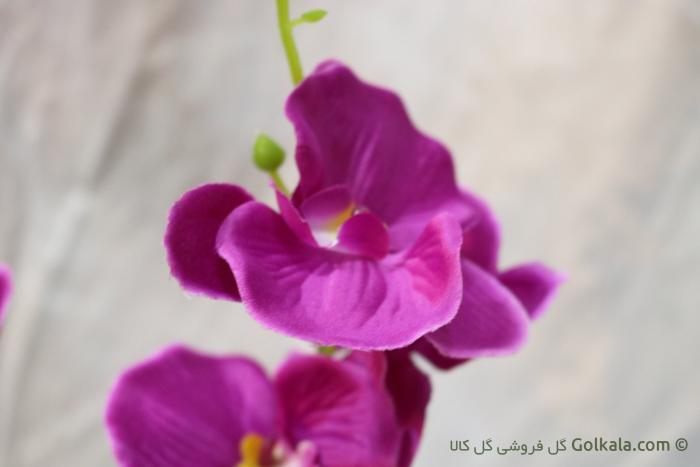 گل ارکیده آنا - گل زیبا