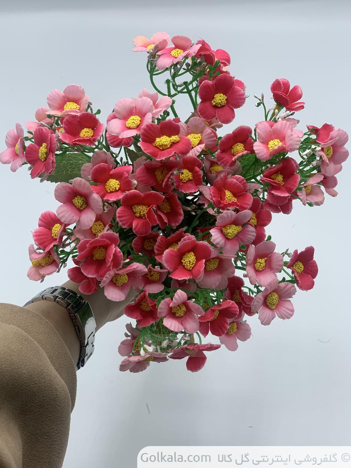 گل بهاره صورتی سرخابی1