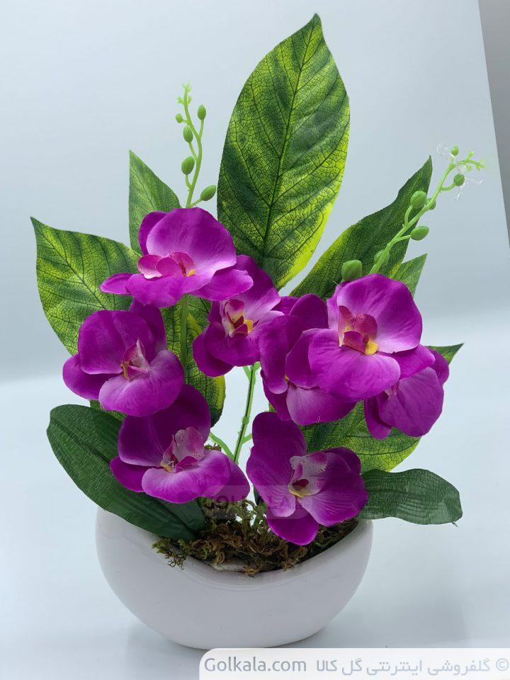 گل-ارکیده-آنا-بنفش-سفید-گلهای-زیبا-گل-کالا