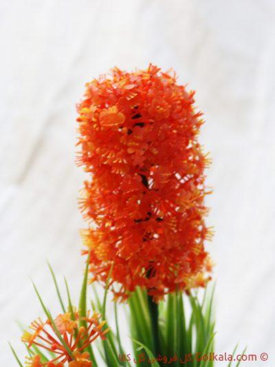عکس گل سنبل نارنجی-گل آپارتمانی