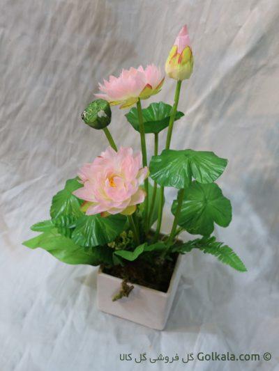 گل نیلوفر صورتی - گل مرداب آّبی