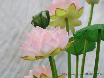 گل نیلوفر آبی - عکس گل نیلوفر