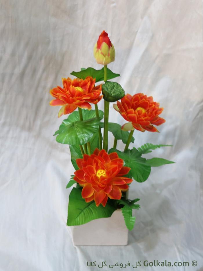 گل نیلوفر مرداب آبی
