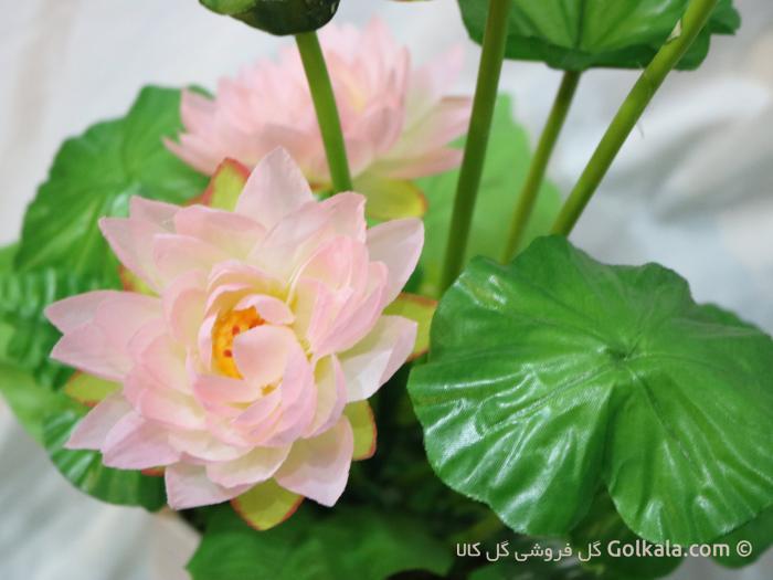 گل نیلوفر مرداب - گل زیبای نیلوفر