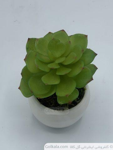 گل کاکتوس مراکشی1
