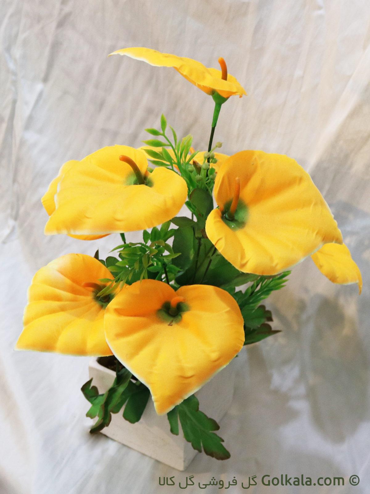 آنتریم گل زیبا زینتی