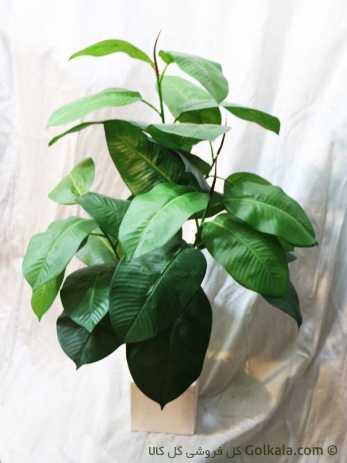 درختچه فیکوس متوسط, گل آپارتمانی, گل و گیاه