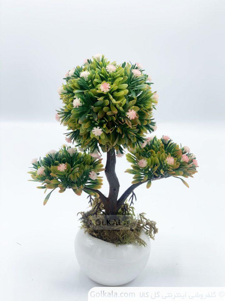 گلدان درختچه بنسای