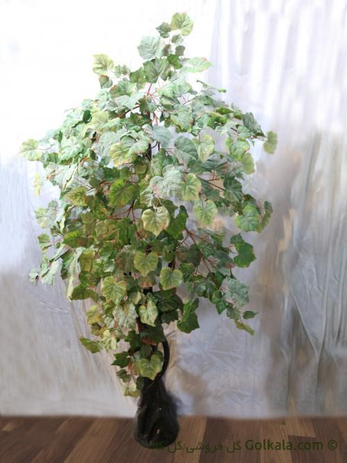 درخت انگور - برگ مو