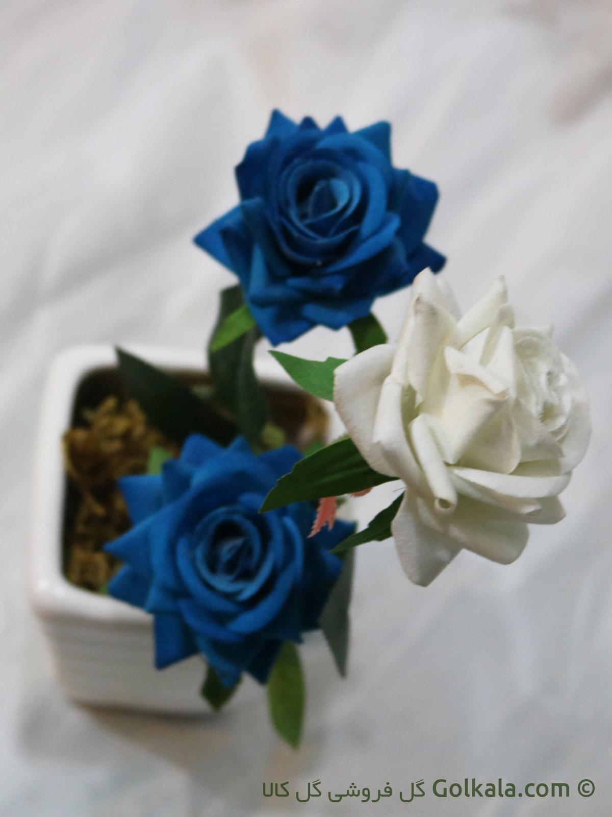 گل رز آبی, گل رز سفید, گلهای زیبا رز