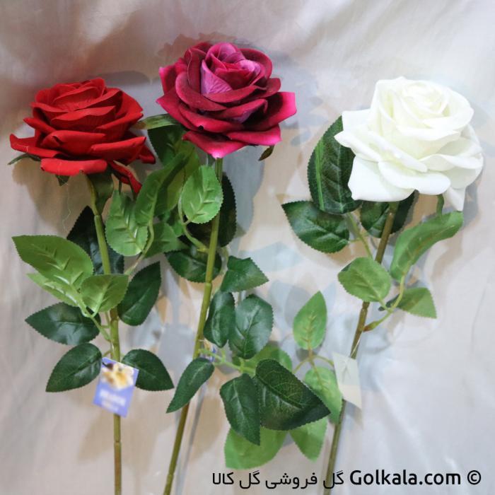 رز جیر در رنگهای متفاوت,گلهای زیبا