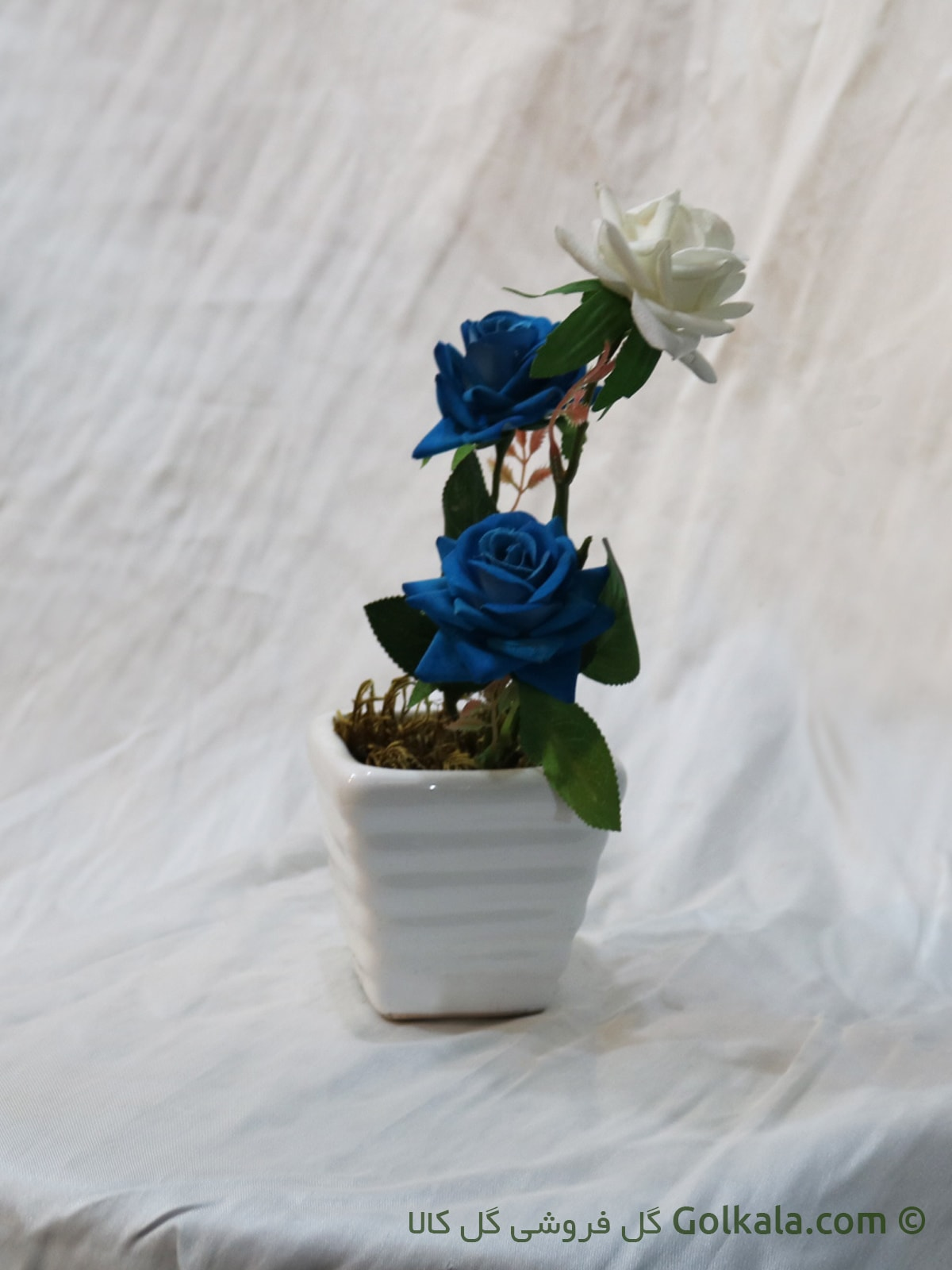 گل رز سفید, گل رز آبی
