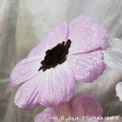 گل شقایق صورتی-شقایق برفی