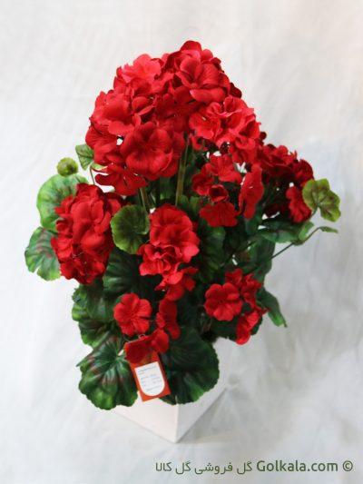 گل شمعدانی قرمز, عکس گل