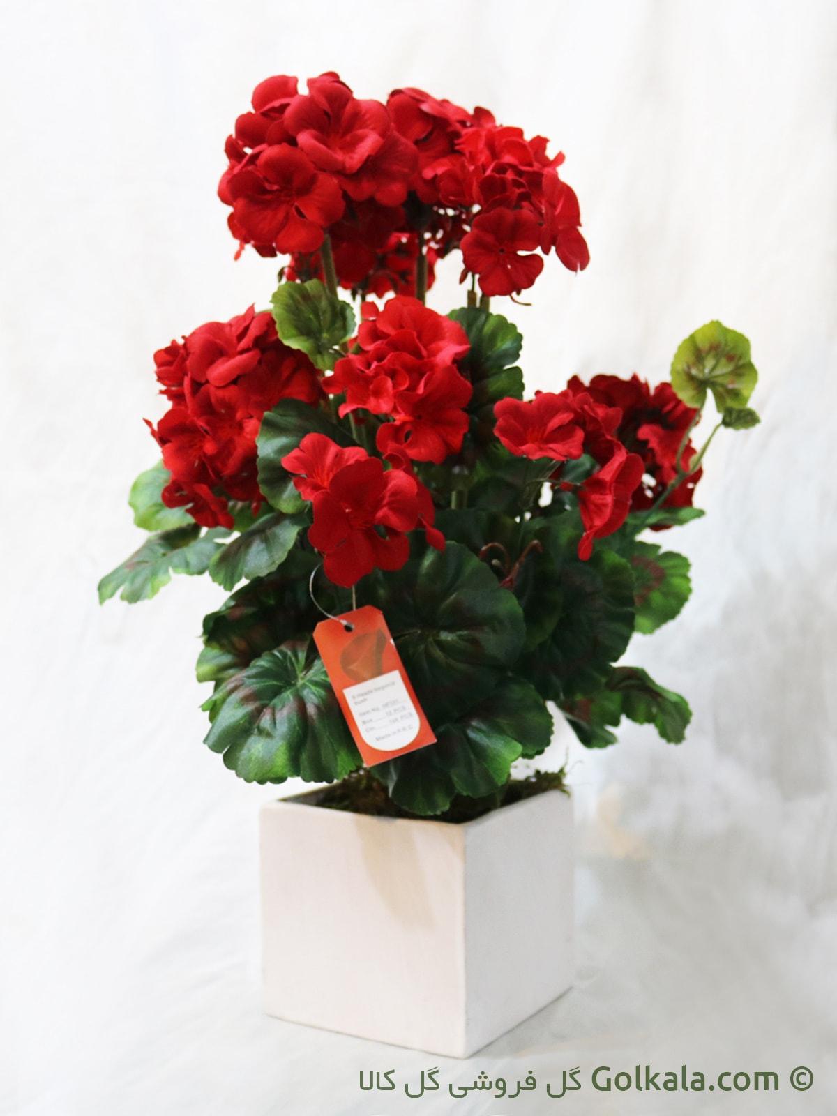 گل شمعدانی قرمز, عکس گل سرخ