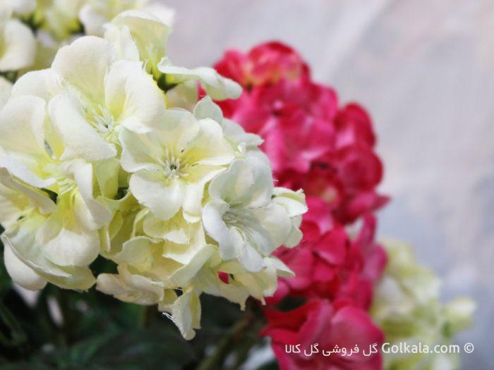 گل شمعدانی صورتی سفید , گل کالا