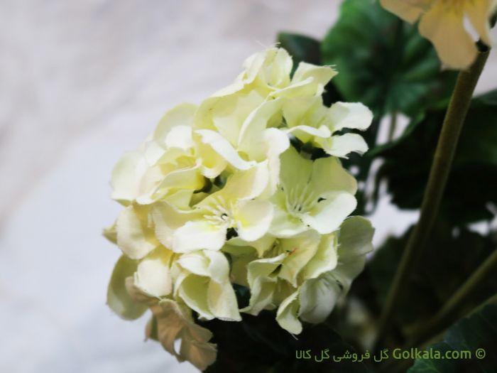 گل شمعدانی سفید, گل سفید