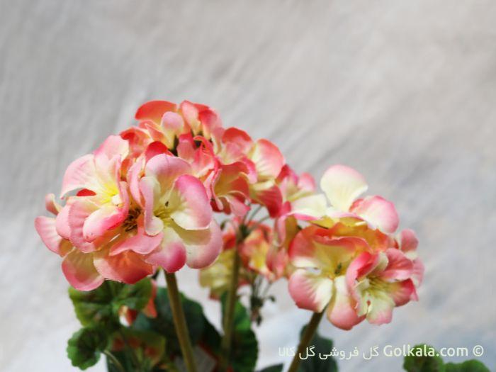گل شمعدانی, گلهای قشنگ