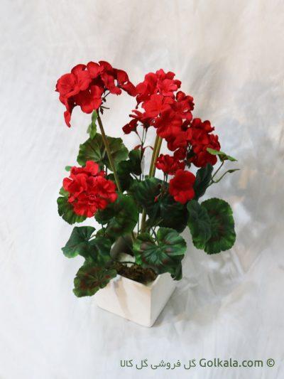 گل شمعدانی قرمز, شمعدونی
