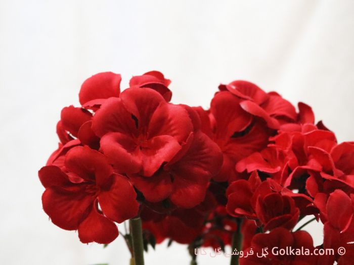 گل شمعدانی سرخ, گل وگیاه