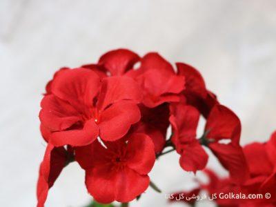 گل شمعدانی قرمز, عکس گل قرمز