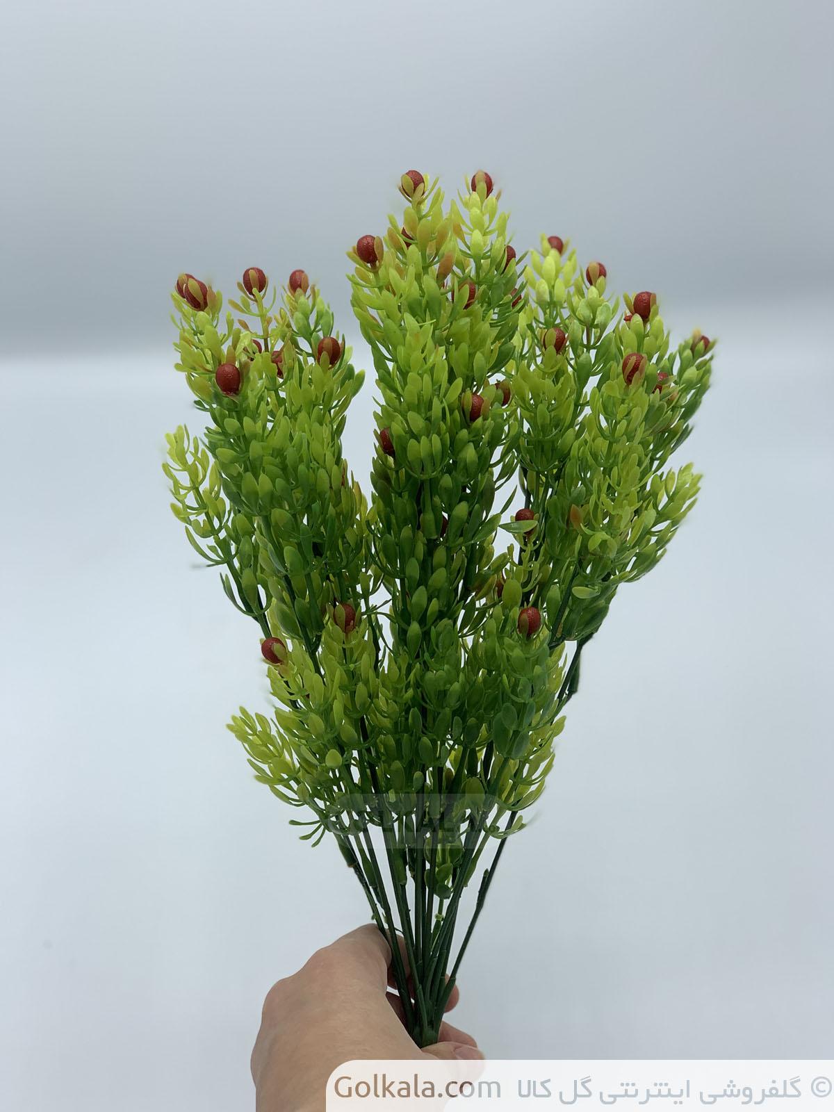 گل فروشی گل کالا, خرید گل مصنوعی, گل و گیاه, گل وگیاه, گیاهان آپارتمانی, گل فروشی آنلاین, پیچک, برگ سبز