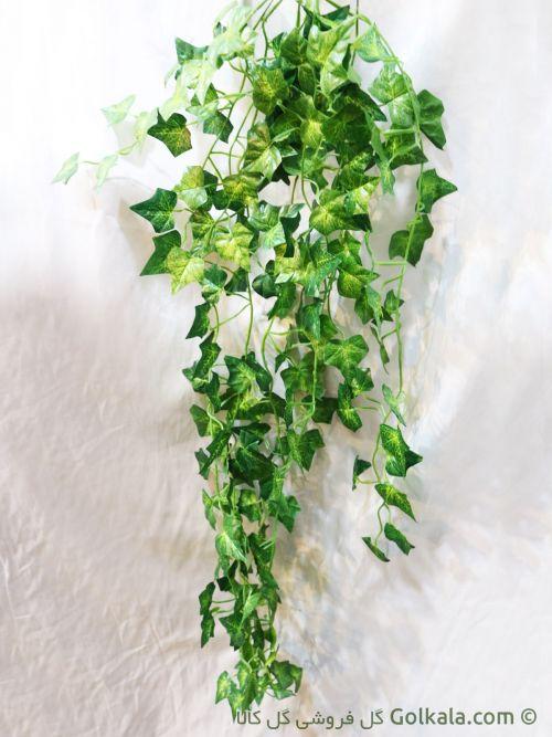 برگ پیچک - ریسه برگ سبز