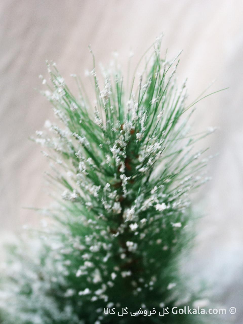 تصویر درختچه کاج برفی کوچک