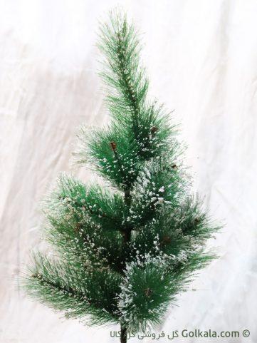 عکس درختچه کاج برفی کوچک