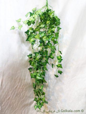 برگ پیچک - برگ سبز