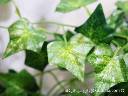 برگ - برگ سبز - برگ پیچک