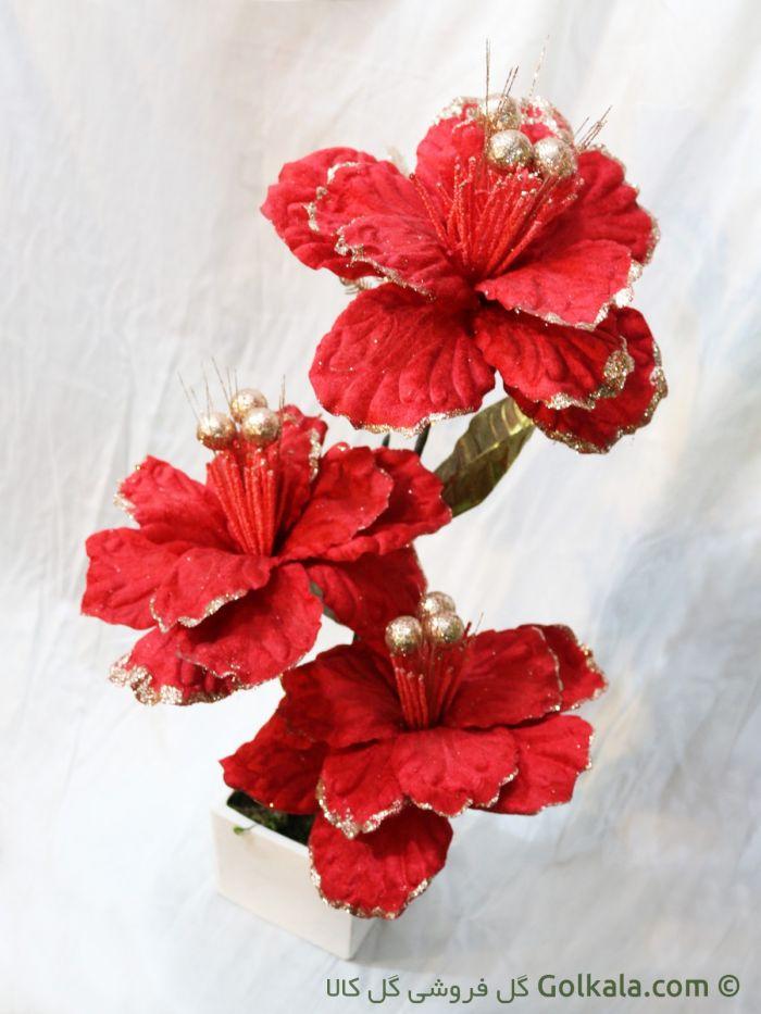 گل ختمی آفریقایی زیبا