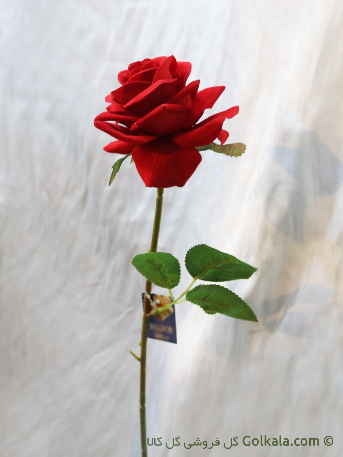 شاخه گل رز سرخ