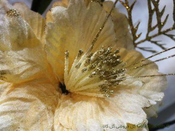 عکس گل زیبا ختمی زرد