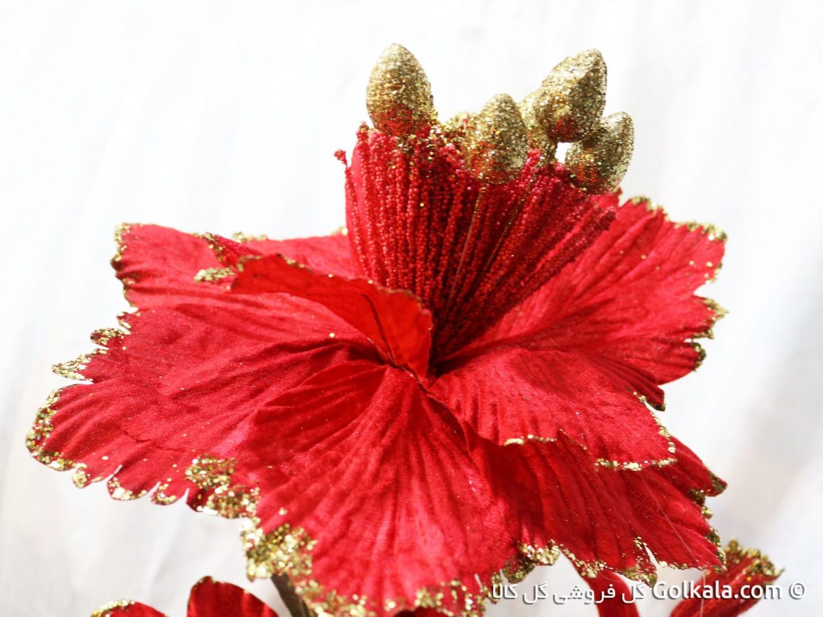 گل ختمی قرمز