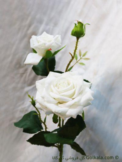 گل رز سفید - شاخه گل رز مخملی