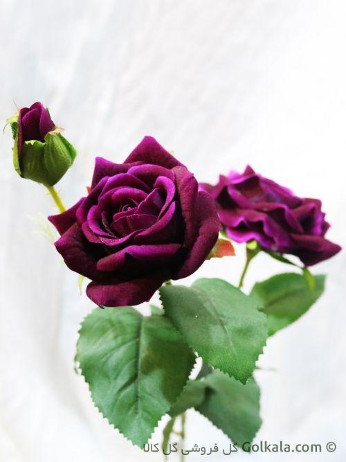 شاخه گل رز مخملی - گل رز بنفش
