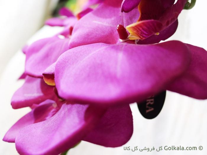 ارکیده ارغوانی - گل ارکیده زیبا