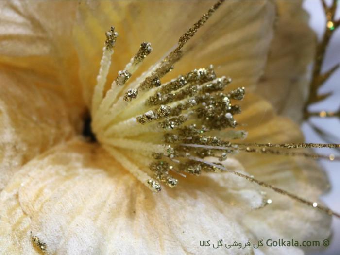 عکس گل ختمی زرد