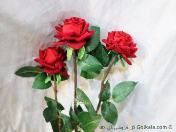 گل رز - گل رز صورتی - گل رز سرخ