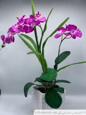 عکس-گل-ارکیده-گل-بنفش-گلدان-گل-زیبا-تصاویر-زیبای-گل-خرید-گل-سایت-گل-کا