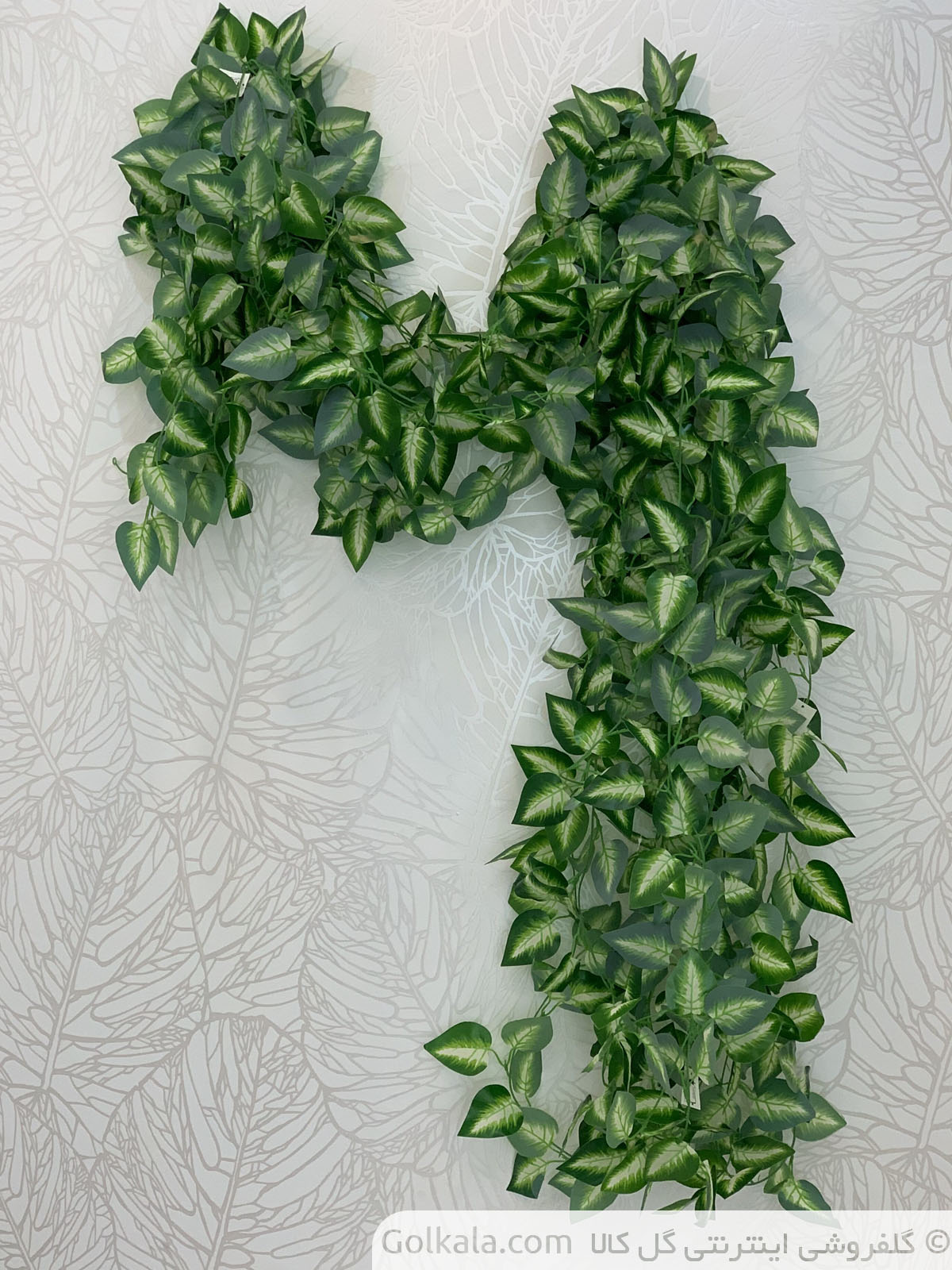 ریسه پیچک برگ سبز جنگلی گل کالا