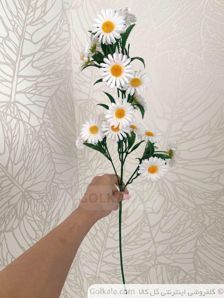 شاخه گل بابونه گل کالا